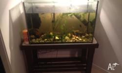 Fish tank 78 x 51 x 39 cm. Two Filters Nice wooden