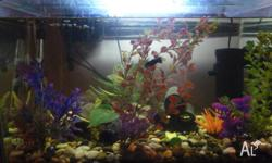 fish tank for sale approx 2ft long comes with all the