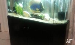 (4') Fish Tank & Stand with filter & hood...(Breeding