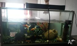 Fish tank, filter, light and two gold fish. Size of