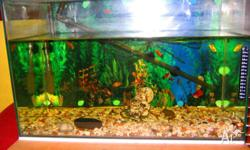 BEAUTIFUL FISH TANK VERY LOW MAINTENANCE FULLY EQUIPED