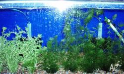 AMAZON AQUARIUMS CLOSING DOWN SALE. LOTS OF ITEMS ON