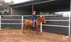 2 yr old filly out of paint QH mare by stockhorse