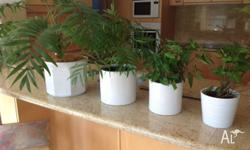 large white flower pots wiht plants, various sizes -