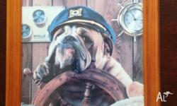 A FRAMED PRINT OF A BULLDOG AT THE HELM. MEASURES