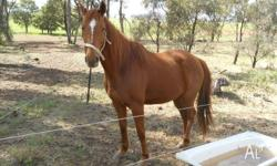 I have 2 horses for sale, this listing if for Fred,