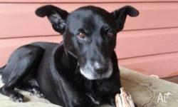 Chappy is a Labrador / Kelpie and pretty healthy. He
