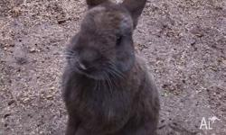 Our beloved bunny needs a new home as we are moving and