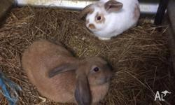 Friendly young rabbits for sale. We are looking for