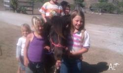 Registered 10.2 hh, 6 yr old Shetland. Leadline or ride