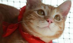 Sunny is an adorable classic ginger coloured male