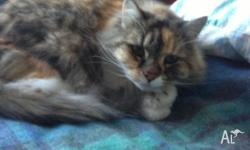 MISSEY CAT FREE to a good home 12 year old female cat