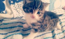 3 1/2 month old tabby to good home - she will need