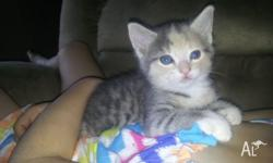2 female kittens ready for their forever homes in a few