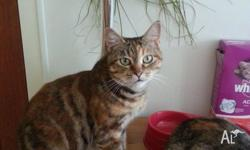 Up for adoption is this beautyfully natured girl approx