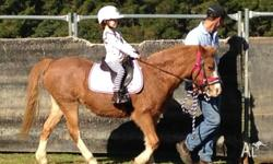 18 year old registered Welsh pony mare 11.2hh An