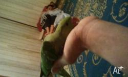 Hi im have a beutiful indian ringneck its hand tamed