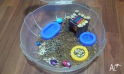 Hey i have 2 hermit crabs few shells food etc guide to