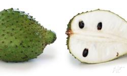 the offer is one soursop plant similar to the size in