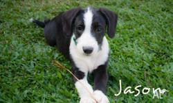 Jason is loving , playful and would be a great family