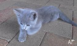 Last kitten left needing a loving new home! 9wks old,