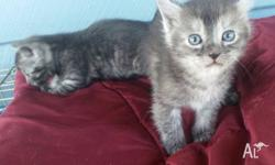 Kittens looking for new homes. They are vaccinated,