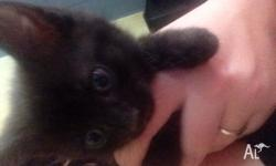 I have 3 female kittens for sale They have been wormed