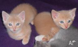 kittens to give away. 6wks and 3 days old there are 4m