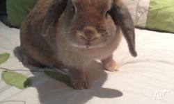 Young, attractive independent lady rabbit looking for