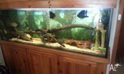 For sale is large tropical aquarium. Tank is 6ft long,