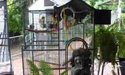 A LARGE BIRD CAGE SUITABLE FOR A PARROT, BUDGIES OR