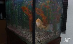 * Large fish tank with timber stand & hood. * TANK