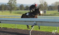 Learn to ride trackwork with an experienced coach that