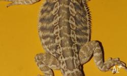 He is het for hypo and poss het for trans. Approx 4
