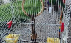 Hi there I am selling my lovely birds with the cage.