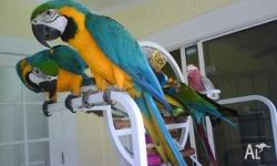 Our parrots Love To Be Loved, Hand Fed and Hand