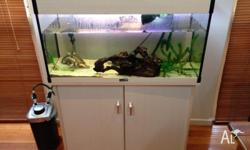 2 year old Macleay River Turtle and 90L Aqua One Tank
