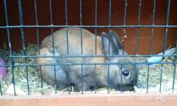 One male rabbit with hutch for sale with accessories.