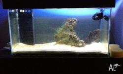 hi up for sale today is a 3ft marine fish tank setup,