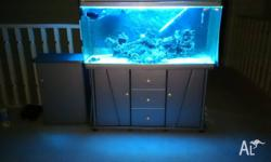 Aqua One seamless 175 Lt Salt Water marine tank setup