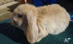 FOR SALE @ COVE BUNNIES also advertised on my facebook