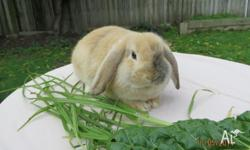 I have 3 mini lop X dwarf lop rabbits ready for urgent