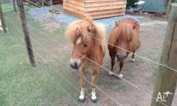 Millie - Mare 7.5 years, 8.5 hands, microchipped,