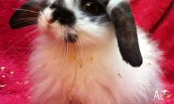 I have some very special baby rabbits available for