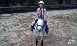 Misty is a very attractive 12hh blue roan welsh mare
