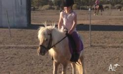 Missy 9.2 hh broken to harness and saddle reg Shetland