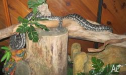 I have a 5yr old Muray Darling python and enclosure for