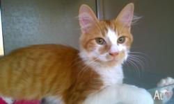 My Little kitten need lovely home, he very cute and