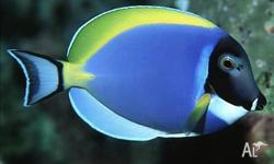 Melbourne Tropical Fish Imports - New Marine Fish
