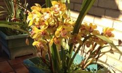SELLING: ORCHIDS - there are hundreds of Orchids for